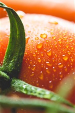 Tomato, vegetable, water drops