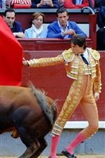 Preview iPhone wallpaper Toreador, bull