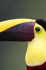 Preview iPhone wallpaper Toucan close-up, bird, beak