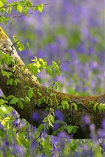 Tree, green leaves, blue flowers