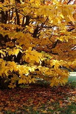 Preview iPhone wallpaper Tree, yellow leaves, autumn
