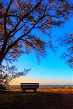Trees, bench, sunshine, park