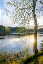 Vorschau des iPhone Hintergrundbilder Bäume, Gras, See, Sonnenschein, Frühling