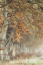 Preview iPhone wallpaper Trees, road, fog, autumn, morning