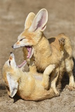 Preview iPhone wallpaper Two fox cubs playful