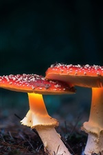 Preview iPhone wallpaper Two red mushrooms
