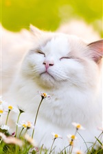 Preview iPhone wallpaper White cat feeling the fresh air