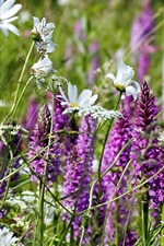 Preview iPhone wallpaper White chamomile and purple wildflowers
