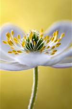 Preview iPhone wallpaper White flower macro photography, petals, stamens