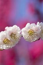 Flores brancas fotografia macro, galhos, fundo desfocado