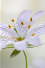 iPhone壁紙のプレビュー 白い花弁の花、雄しべ、茎