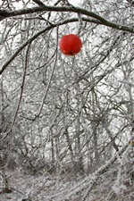 Preview iPhone wallpaper Winter, one red apple, tree, twigs, snow