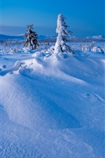 Preview iPhone wallpaper Winter, snow, trees, Sweden, Lapland