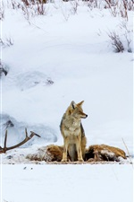 Preview iPhone wallpaper Wolf, bird, snow, winter