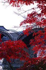 Preview iPhone wallpaper Wooden arched bridge, river, trees, red maple leaves, Kintai, Japan