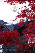 미리보기 iPhone 배경 화면 목조 아치교, 강, 나무, 붉은 단풍, 긴 타이, 일본