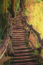 Preview iPhone wallpaper Wooden bridge, gorge, trees