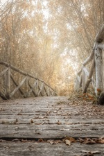 Wooden bridge, trees, leaves, autumn