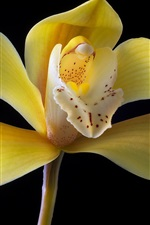 Preview iPhone wallpaper Yellow petals orchid close-up, black background
