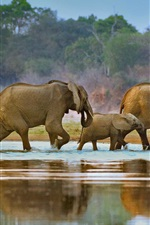 Preview iPhone wallpaper Africa, elephants, walk, river, Luangwa, Zambia