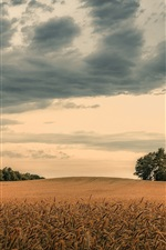 Preview iPhone wallpaper Autumn, field, trees, clouds, dusk