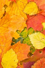 Preview iPhone wallpaper Autumn, red and yellow leaves, ground