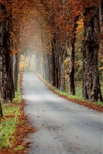 Preview iPhone wallpaper Autumn, road, trees, morning