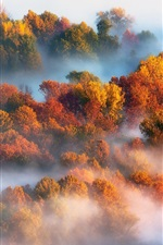 Preview iPhone wallpaper Autumn, trees, fog, morning