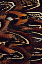 Preview iPhone wallpaper Bird feathers macro photography