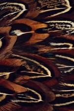 Bird feathers macro photography
