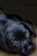 Black puppy sleep