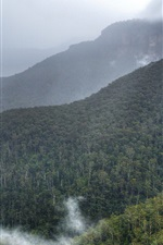 Preview iPhone wallpaper Blue Mountains, Australia, Sydney, forest, trees, fog