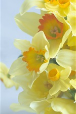 Preview iPhone wallpaper Bouquet, daffodils, yellow flowers