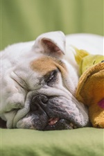 Preview iPhone wallpaper Bulldog sleep, toy