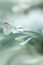 Butterfly, dew, leaves, macro photography