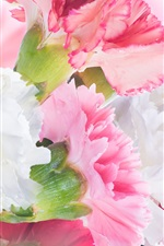 Preview iPhone wallpaper Carnations, white and pink flowers