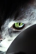 Cat green eyes, light