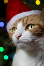 Preview iPhone wallpaper Cat, hat, Christmas, colorful lights