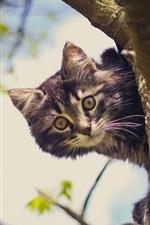 Preview iPhone wallpaper Cat in tree, look, bokeh