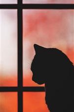 Cat, window, silhouette