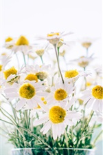 Preview iPhone wallpaper Chamomile, daisy, bouquet, vase