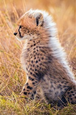 Preview iPhone wallpaper Cheetah cub, mane, grass, Africa