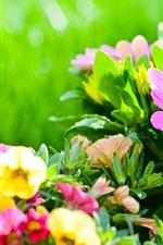 Preview iPhone wallpaper Colorful flowers, flowerbed, petunias