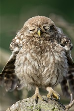 Preview iPhone wallpaper Cute little owl to sleep