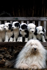 Preview iPhone wallpaper Dog and puppies, family