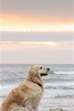 Dog, beach, sea