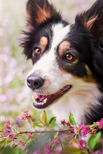 Preview iPhone wallpaper Dog, face, flowers, bokeh