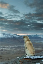 Preview iPhone wallpaper Dog sit to look landscape, mountains, clouds