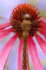 Preview iPhone wallpaper Dragonfly, pink flower