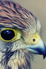 Preview iPhone wallpaper Eagle baby, head, eyes, beak, feathers
